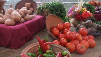 Photo of Chaleur sérieuse: la chermoula marocaine, une recette de sauce-marinade-pâte sous-estimée